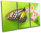 Butterfly Animals TREBLE CANVAS WALL ART Picture Print VA
