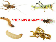 Reptile Live Food Locusts, Crickets, Mealworms, Morio Worms, Wax Worms Fruit Fly