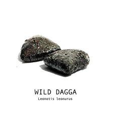 WILD DAGGA 2 g Leonotis leonurus PREMIUM RESIN EXTRACT NO HEAT RELAXING