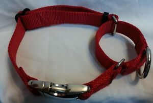 1.5 Martingale Dog Collar Great For Training USA Made Tough  METAL BUCKLES