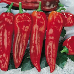 Pepper 7 Thor F1 Seeds - UK Seller