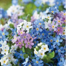 Flower - Kings Seeds - Myosotis - Forget Me Not - Victoria Mix  - 500 Seed