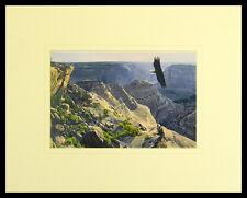 Dino Paravano Bald Eagle over Canyon de Chelley Poster Kunstdruck & Rahmen 40x50