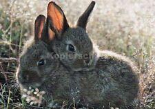 "Postkarte, Hasen, Kaninchen ""Osterhasen"""