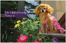FLOWERS INSPIRATIONAL Beautiful Life Poster by Giggles by Gigi™ 17x11 Dog Poster