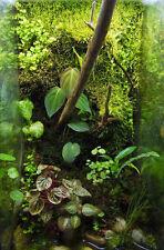 Living Background Terrarium Clay vivarium sculpting material dart frog insects