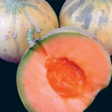 Heirloom French CHARENTAIS MELON Cantaloupe✽75 SEEDS✽Sweet✽FLAT RATE COMBINE S/H
