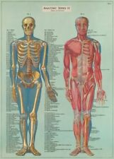 Anatomy Poster Non-Fiction Books
