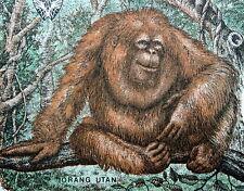 Indonesia Money 500 Rupiah Orangutan 1992 Banknote 25% Charity Donation