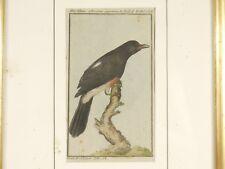ANTIQUE GERMAN BUFF VOGEL BLACK BIRD COLOR ENGRAVING PLATE PRINT FRAMED