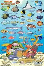 "Roatan Reef Creatures Guide Waterproof Fish ID Card by Franko Maps 4"" x 6"""
