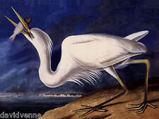 John J Audubon Great Blue Heron Needlepoint Canvas