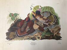 John J. Audubon Deluxe Edition Ruffed Grouse Tetrao Umbellus Engraving Plate XIL