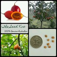 20+ RED TAMARILLO SEEDS (Solanum betaceum 'Red') Tree Tomato Edible Fast Growing