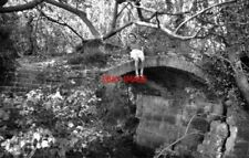PHOTO  1973 PALLINGHAM BRIDGE WEY AND ARUN CANAL A BOY SITS PRECARIOUSLY ON THE