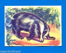 ANIMALI - Lampo 1964 - Figurina-Sticker n. 72 - TASSO -New