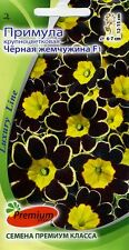 """Primula grandiflora """"Black Pearl F1"""""""