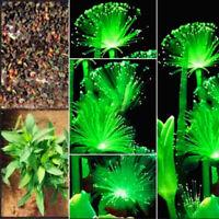 100Pcs Émeraude Fluorescent Fleur Graines Perles Plantes Aquarium Herbe Graine