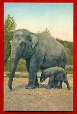 ELEPHANT BABY ELEPHANT VINTAGE POSTCARD 655