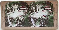 Funeral Del Altavoz Mckinley USA Foto Estéreo Stereoview N º L8 Vintage