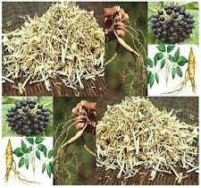 Siberian Ginseng Herb Seeds - Eleutherococcus senticosus - Combined S&H