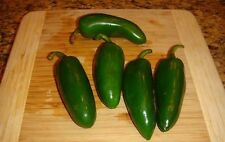 Jumbo Jalapeno Pepper 25 Seeds