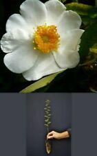 Rosen-Pflanzen, Bäume & Sträucher mit in Rosa