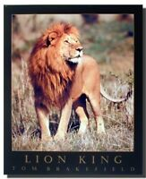 African Lion King Animal Wildlife Living Room Wall Decor Art Print Poster 16x20
