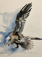 "Original watercolor painting by artist Zina Andresini Poliszuk ""Eagle"""