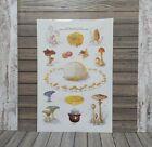 "Vtg. Smokey The Bear Poster ""Have Fungi But Be Careful""More LAMINATED!"