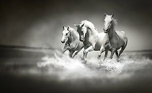 Galloping Horses Premium Wall Decor High Quality Mural Wallpaper Black and White