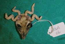 Animal Skull Mask 4 Twisted Horns Ken & Barbie Family, GI Joe, HS Musical KNM06