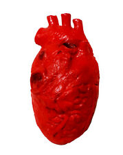 Realistic Life-size Foam Stage Prop  Anatomy Cardiology Heart