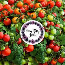 ‼️NEU MINITOMATE RED ROBIN 10 Tomatensamen Samen ZWERG Sorte sehr süss kompakt