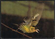 Postcard. Animals. Birds. Siskin. J. Arthur Dixon. Unused.