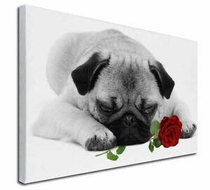 """Pug (B+W Photo) with Red Rose X-Large 30""""x20"""" Canvas Wall Art Pr, AD-P92R2-C3020"""