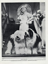 OLD ENGLISH SHEEPDOG FILM STAR JEAN HARLOW AND DOGS OLD ORIGINAL 1934 DOG PRINT