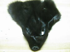 Fur Faces Fox Blue Fox Dyed COLOR  BLACK Trapping Fur Coats