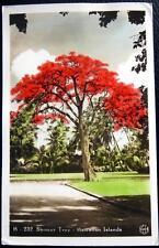Honolulu Hawaii ~ 1939 Shower Tree ~ Pink Blooms ~ Gorgeous ! Rppc