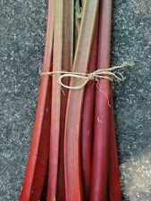 ☺50 graines de rhubarbe Victoria  récolte 2016