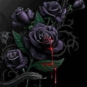 Black Rosess