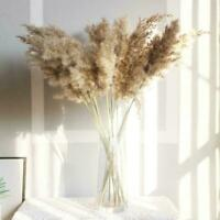 30 pcs Natural Dried Flowers Bouquets Rabbit Tail Grass Tails Bunny Deco L0Y0