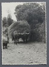 Le Falgoux Auvergne Foins Photographie originale années 1950 région de France