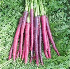 30pcs vegetable Seeds Cosmic Purple Carrot
