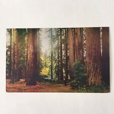 Fall Leaves In The Redwoods Unposted Postcard
