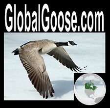 Global Goose .com Classic Name Easy To  Say Remember CanadaBrand  Domain Name