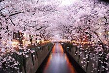 20 Pcs! Beautiful Japanese Sakura Flower Red seeds Cherry Blossoms Tree seeds