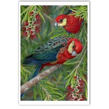 © ART - BIRD Australian Western Rosella Parrot Original artist print by Di