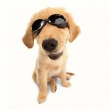 Doggles ILS Sunglasses - LEOPARD FRAMES - LARGE- Dogs 50-100 lbs