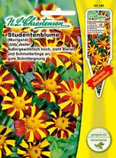 Studentenblume Jolly Jester,Tagetes patula nana,Saatgut,Blume,Chrestensen,SpS